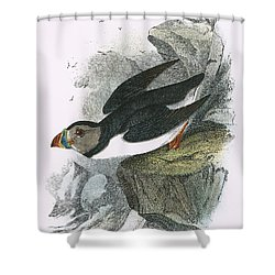 Puffin Shower Curtain by English School