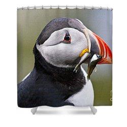Puffin Shower Curtain by Heiko Koehrer-Wagner