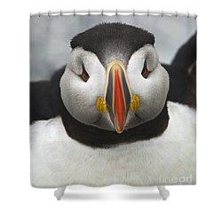 Puffin It Up... Shower Curtain by Nina Stavlund