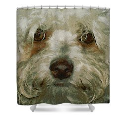 Puppy Eyes Shower Curtain by Ernie Echols