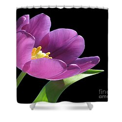 Pure Beauty Shower Curtain by Cheryl Young