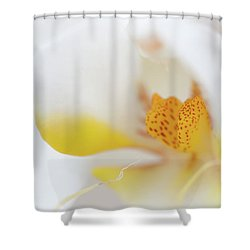 Pure White Shower Curtain by Sebastian Musial