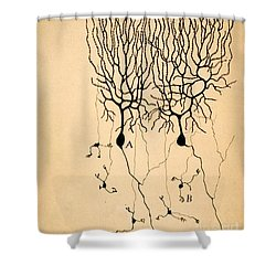 Purkinje Cells By Cajal 1899 Shower Curtain by Science Source