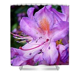 Purple Azalea Shower Curtain by Rona Black
