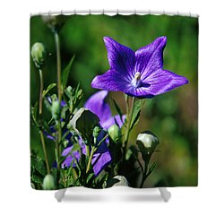 Purple Balloon Flower Shower Curtain by Anonymous
