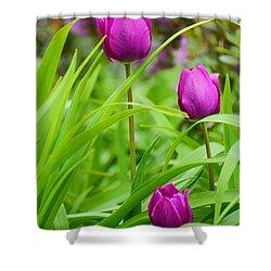 Purple Gems- Purple Tulips Rhode Island Tulips Purple Flower Shower Curtain by Lourry Legarde