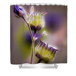 Purple Haze Shower Curtain by Optical Playground By MP Ray