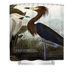 Purple Heron Shower Curtain by John James Audubon