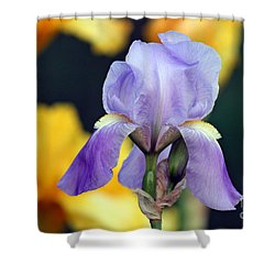 Purple Iris Shower Curtain by Karen Adams