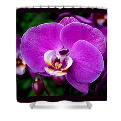Purple Orchid Shower Curtain by Rona Black