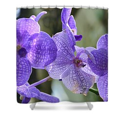 Purple Orchids Shower Curtain by Kathleen Struckle