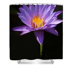 Purple Petals Shower Curtain by Sabrina L Ryan