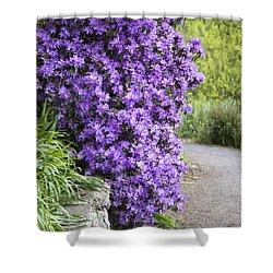 Purple Spring Shower Curtain by Priya Ghose