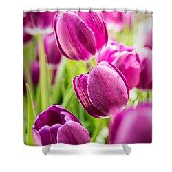 Purple Tulip Garden Shower Curtain by  Onyonet  Photo Studios
