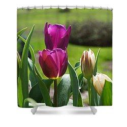 Purple Tulips Garden Art Print Tulip Flowers Shower Curtain by Baslee Troutman