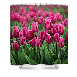 Purple Tulips Shower Curtain by Inge Johnsson