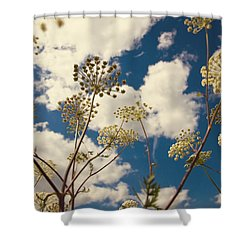 Queen Anne Lace And Sky I Shower Curtain by Jenny Rainbow
