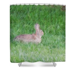 Rabbit In The Grass Shower Curtain by Michael Stowers