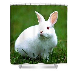Rabbit On Grass Shower Curtain by Lanjee Chee