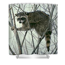 Up A Tree Shower Curtain by Ellen Henneke