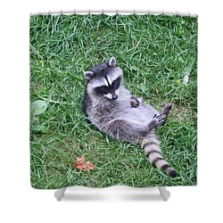 Raccoon Plays In The Grass Shower Curtain by Kym Backland