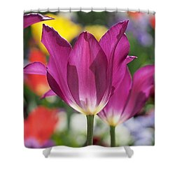 Radiant Purple Tulips Shower Curtain by Rona Black