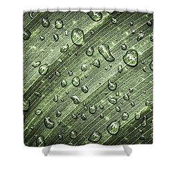 Raindrops On Green Leaf Shower Curtain by Elena Elisseeva