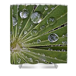 Raindrops On Lupin Leaf Shower Curtain by Heiko Koehrer-Wagner