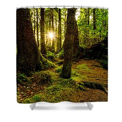 Rainforest Path Shower Curtain by Chad Dutson