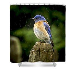 Raining Shower Curtain by Jean Noren