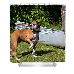 Ranger The Boxer Shower Curtain by Stephanie McDowell