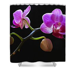 Rare Beauty Shower Curtain by Juergen Roth