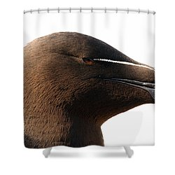 Razorbill Auk Shower Curtain by Jeannette Hunt