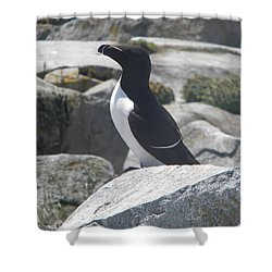 Razorbill Shower Curtain by James Petersen