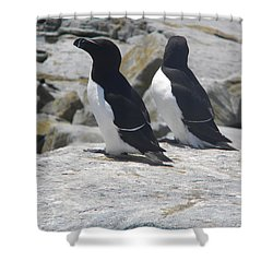 Razorbills 2 Shower Curtain by James Petersen