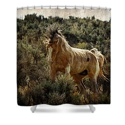 Ready To Rumble D9637 Shower Curtain by Wes and Dotty Weber