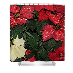 Red And White Poinsettia Shower Curtain by Kathleen Struckle
