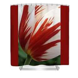 Red And White Tulip  Shower Curtain by Ben and Raisa Gertsberg