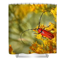 Red Beetle Shower Curtain by Marty Fancy