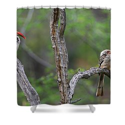 Red-billed Hornbills Shower Curtain by Bruce J Robinson