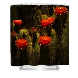 Red Cactus Flowers II  Shower Curtain by Saija  Lehtonen