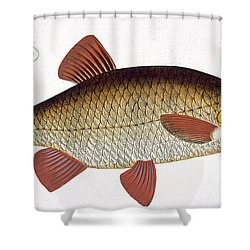 Red Carp Shower Curtain by Andreas Ludwig Kruger
