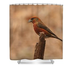 Red Crossbill Shower Curtain by Charles Owens