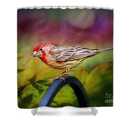 Red Finch Shower Curtain by Darren Fisher