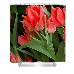 Red Ladies Shower Curtain by Kathleen Struckle