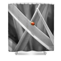 Red Ladybird Shower Curtain by Chalet Roome-Rigdon