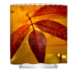 Red Leaves At Dawn Shower Curtain by Deb Halloran