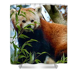 Red Panda Shower Curtain by Trever Miller