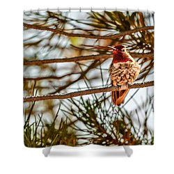 Red Rock Country Hummingbird Shower Curtain by Bob and Nadine Johnston