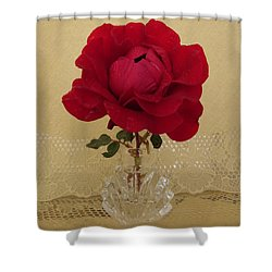 red rose III Shower Curtain by Zina Stromberg